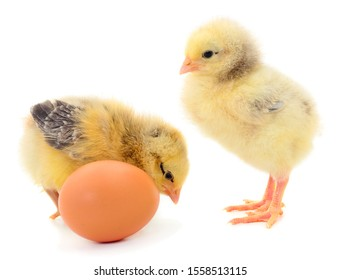 Two chickens and egg isolated on white background.