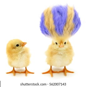 Zwei Küken ein verrückt mit noch verrücktem Haar