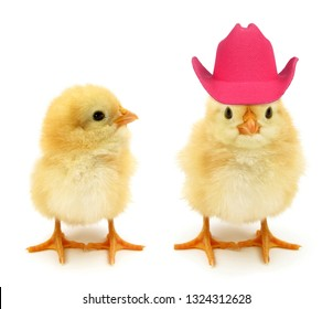 Two chicks one with crazy pink hat
