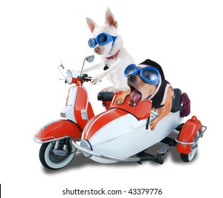 two chihuahuas in a scooter and sidecar
