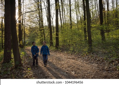 Two children boys walking on a path in spring forest in evening backlit light.