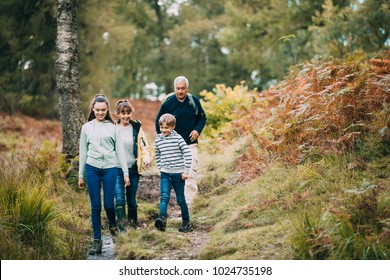 Two children are hiking with their grandparents in the woodland of the Lake District.