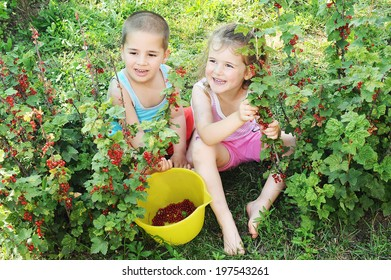 Two children is picking gooseberry in the field