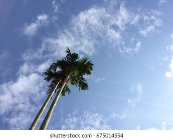 two coconut tree on sunny day taken from the bottom with light blue sky as background