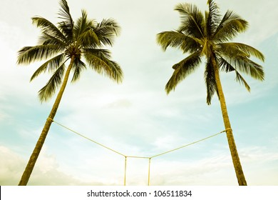 Two coconut trees bind from below angle