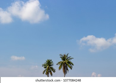 Two coconut trees on blue sky background and white cloud