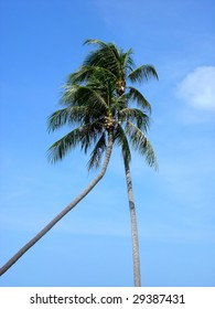 two coco-trees