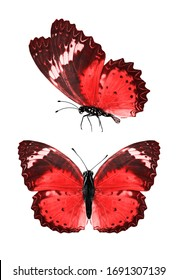 two colored butterflies isolated on a black background