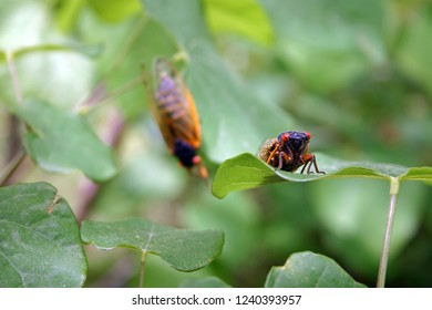 Two colorful cicadas hanging out in a forest of leaves