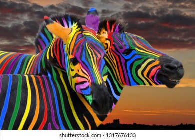 Two colorful zebra painted in the colors of the rainbow cuddle on the background of a beautiful sky. Sunset