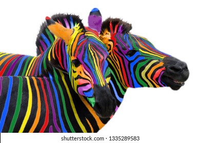 Two colorful zebra painted in the colors of the rainbow, cuddling on a Isolated on white background.. Not like everyone else, other.. Not like everyone else, other.