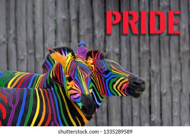 Two colorful zebras painted in the colors of the rainbow cuddle on the background of a wooden fence. The concept of same-sex love and gender equality. The inscription - pride.