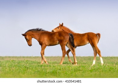 Two colt play on green grass