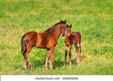 Two colt standing in spring green field