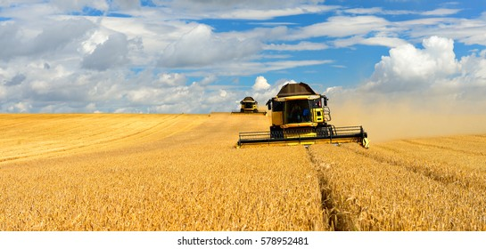 Two Combine Harvesters Cutting Barley, Summer Landscape of endless Fields under blue sky with clouds