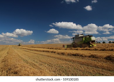 Two combines in barley field, one in background, summer harvest, blue sky with clouds, back perspective