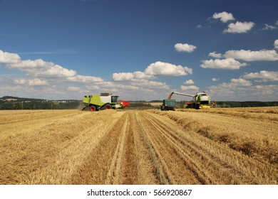 Two combines harvest barley field during hot summer day with blue cloudy sky, straw in row, conventional agriculture