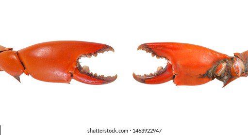 Two Crab Pincers Isolated on white with clipping path