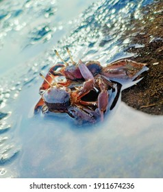 two crabs fight over the territory on a probolinggo beach.