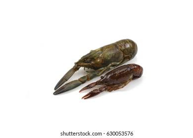 Two crayfish on white background .