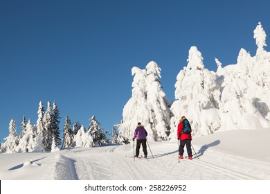 Two cross country skiers against a background of snow wrapped firs and a clear blue sky