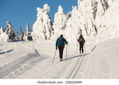 Two cross country skiers with backpacks climbing a hillside with snow wrapped firs