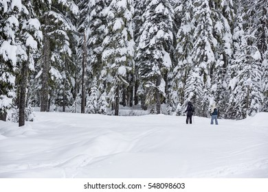 Two cross country skiers skiing along a forest tree lined path of fresh snow during a snowstorm.