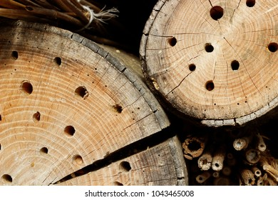 Two cross sections of wooden balks with small holes. Logs with concentric circles ornament photographed in a farm shed. Rural vibes concept.