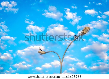Two crows stationed on the streetlight against the background of blue sky with clouds. From Muscat, Oman.