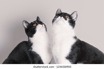 Two cute baby cats looking up