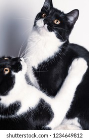 Two cute baby cats plaing