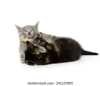 Two cute baby kittens playing and isolated on white background