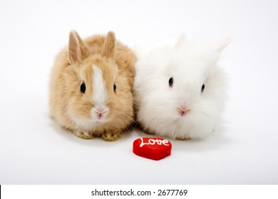 "Two cute baby rabbits with red hearts, sign: ""love"". Isolated on white."