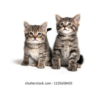 Two cute baby tabby kittens isolated on white background