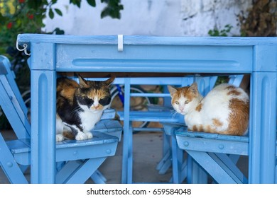 Two cute cats sleeping on wooden chairs under a blue painted wooden outdoor table in Greece, sheltering in the shade from the Mediterranean sun.