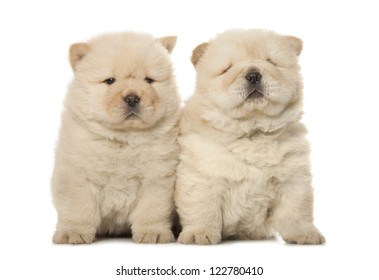 two cute chow-chow puppies isolated over white background