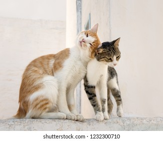 Two cute companioned cats side by side on a wall rubbing their heads against each other, an affiliative behavior also known as head butting, bunting or allorubbing, Aegean island, Greece, Europe