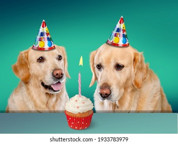 Two cute dogs with party hats and birthday cupcake