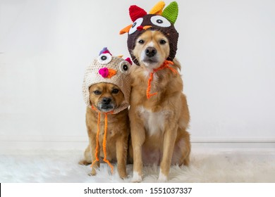 Two cute dogs sitting wearing turkey Thanksgiving hats