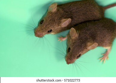 Two cute gray house mouse on a fantastic blue background