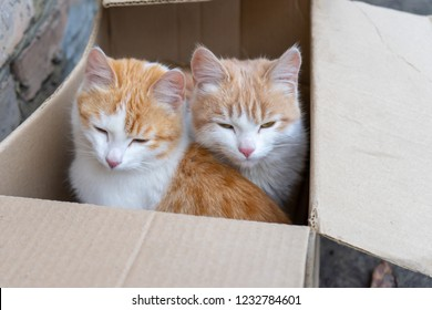 Two cute homeless white and red kitten sitting in cardboard box before sending to nursery. Abandoned animals protection or volunteerism concept