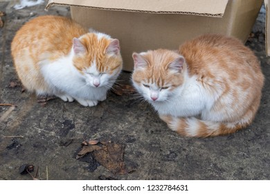 Two cute homeless white and red kitten sitting near cardboard box before sending to nursery. Abandoned animals protection or volunteerism concept
