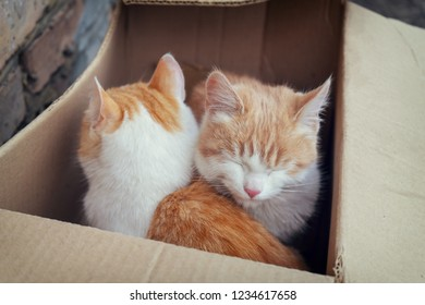 Two cute homeless white and red kitten sitting in cardboard box before sending to nursery. Abandoned animals protection or volunteerism concept. Selective focus, vintage tone