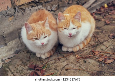 Two cute homeless white and red kitten sitting on ground against brick wall in cold autumn day. Abandoned animals protection or volunteerism concept