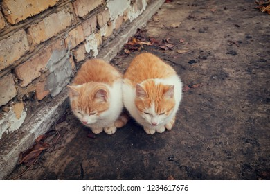 Two cute homeless white and red kitten sitting on ground against brick wall in cold autumn day. Abandoned animals protection or volunteerism concept. Vintage tone