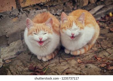 Two cute homeless white and red kitten sitting on ground against brick wall in cold autumn day and meowing. Abandoned animals protection or volunteerism concept