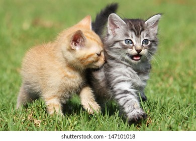 Two cute kittens out for a stroll