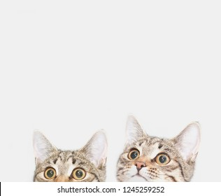 Two cute kittens are waiting to be fed. Curious cats faces looking up