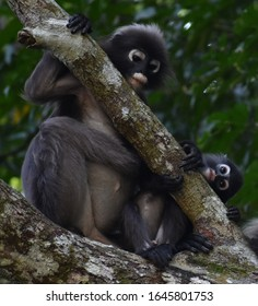 Two cute langur monkeys relaxing in a tree in the jungle