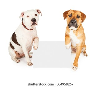 Two cute large breed dogs holding a blank white sign to enter your text onto